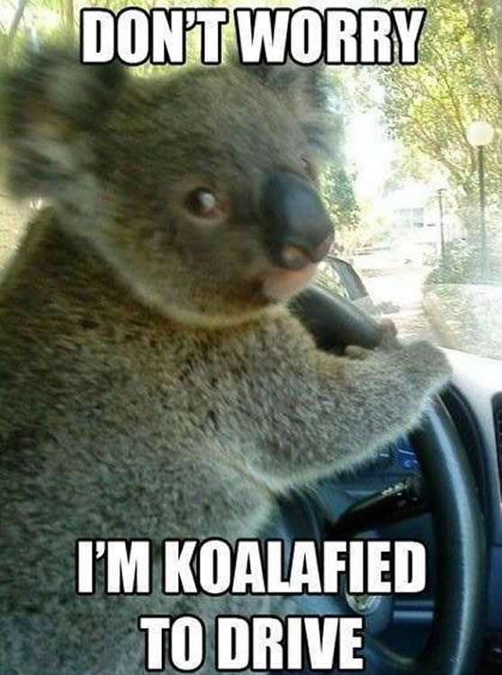 dont-worry-im-koalified-to-drive-driving-memes.jpg